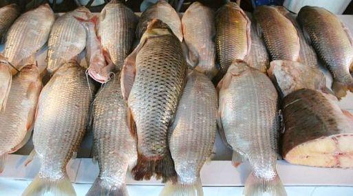 Documento propone mejorar la reducción de peces en la Amazonía peruana
