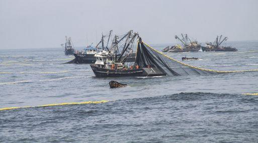 Scotiabank estima que la pesca crecerá en un 18% y no 50% como proyecta el gobierno. (Foto: Difusión)