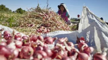 <b>Tottus.</b> Se asocia con más de 350 agricultores para adquirir sus frutas y verduras