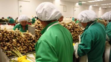 Ley de Inocuidad Alimentaria de EE.UU.: Lo que exige a los exportadores peruanos
