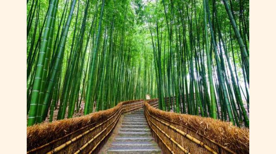 Bosques.easyviajar.com