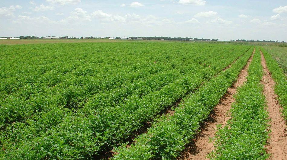 tierras agrícolas