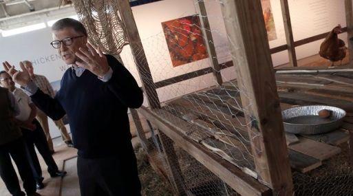 Para Bill Gates, las gallinas son la solución a la pobreza.