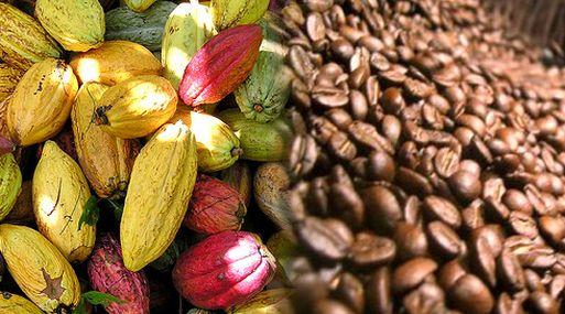 Camsa ha conseguido establecer relaciones con 15 organizaciones de productores de café y cacao.