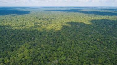 Minagri ya culminó borrador de la nueva ley forestal