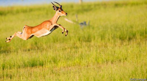 En el mundo del emprendimiento, las gacelas son empresas jóvenes de alto crecimiento. (Foto: Getty Images)