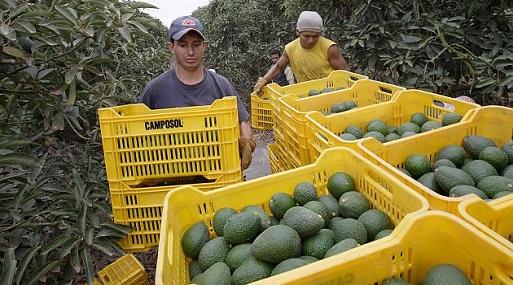Los despachos agrarios tradicionales cayeron en -7%. (Foto: USI)