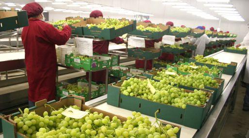 Aumento de las agroexportaciones obedeció a las mayores exportaciones de productos no tradicionales, que registraron un incremento en su valor de exportación de 13%. (Foto: Difusión)