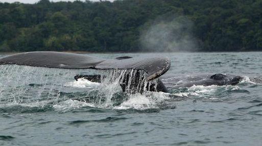 Los científicos detectaron en los cetáceos una serie de rasgos comparables a las sociedades humanas.