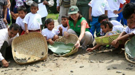 La presencia de la tortuga, de caparazón pardo u oliváceo, piel gris y las escamas negras, ha disminuido en la Amazonía peruana porque sus pobladores comen los huevos y la carne de esta especie.
