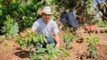 El desarrollo campesino es clave para acabar con el hambre en Latinoamérica - Noticias de naciones unidas