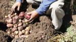 Venta de productos agroecológicos en Perú crecería en 17% en el 2017 - Noticias de crecimiento económico de perú