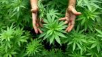 La tecnología y el cannabis negocian en un crucero por Nueva York - Noticias de david rojas