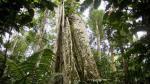 Perú será sede del 53º Consejo Internacional de las Maderas Tropicales - Noticias de gestión comunitaria
