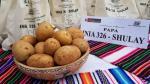 Shulay, la nueva variedad de papa que resiste a heladas y puede cultivarse en la costa - Noticias de salomon perú