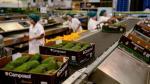 Camposol lanza oferta pública inicial por US$ 345 mlls. en Bolsa de Nueva York - Noticias de arándanos