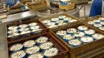 Qali Warma detectó lote de conservas de caballas con partículas extrañas el 24 de octubre - Noticias de qali warma