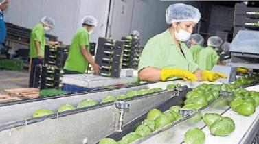 ¿Debe cambiarse el régimen laboral de exportación?